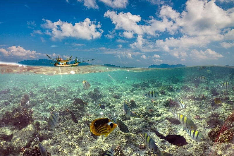 Snorkeling in Cook Islands