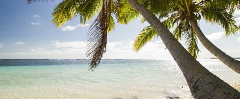 Palm Trees on Costa Rica Beach