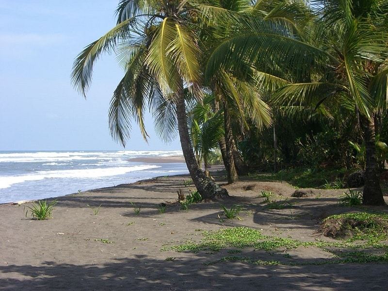 The beach at Tortuguero, Costa Rica