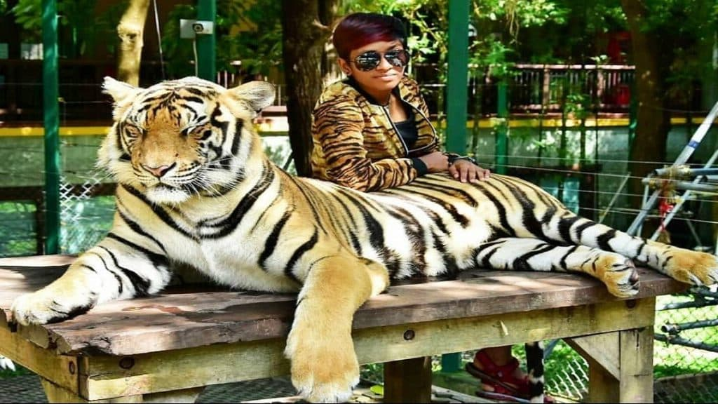 Take photos with Tiger